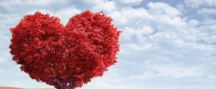 Un coeur fait avec un arbre