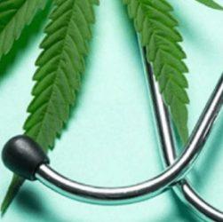 Canabis médical