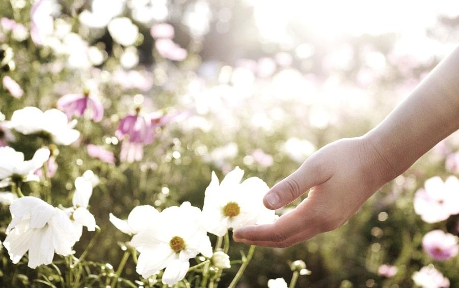 Main qui touche des fleurs dans un champs